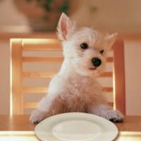 犬の管理栄養士