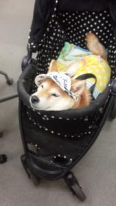 犬の健康管理