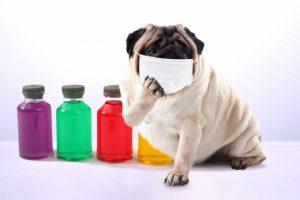 マスクを着けた犬