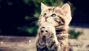 猫健康管理士