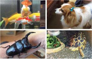 ワンちゃんをはじめ、夏目さんが飼われているクワガタ、カメ、金魚。