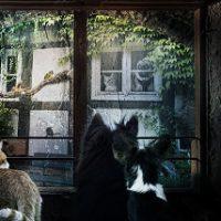 SAEペットの資格ワンポイントアドバイス台風を怖がる犬猫の対処法