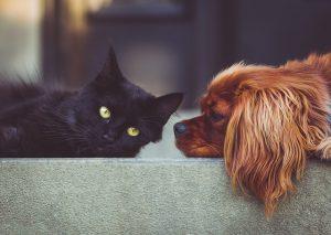 ペット災害危機管理士からの防災ワンポイントアドバイス