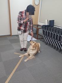 家庭犬訓練士ライセンス取得対策講座認定試験対策で練習する受講生と同伴犬
