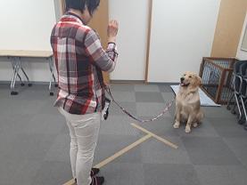 家庭犬訓練士ライセンス取得対策講座認定試験対策でマテを練習する同伴犬