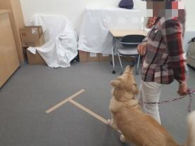 家庭犬訓練士ライセンス取得対策講座認定試験対策で脚側歩行を練習する受講生と同伴犬
