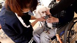 動物介在活動でセラピー犬を膝に乗せて撫でる参加者