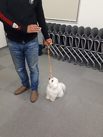 家庭犬訓練士ライセンス取得対策講座でオスワリ練習中の同伴犬