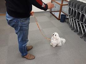 家庭犬訓練士ライセンス取得対策講座でマテ練習中の同伴犬