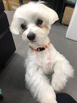 家庭犬訓練士ライセンス対策講座の同伴犬さん
