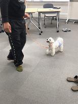 家庭犬訓練士ライセンス対策講座の実技練習
