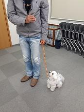 家庭犬訓練士講座でスワレの練習
