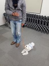 家庭犬訓練士講座でフセの練習