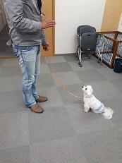 家庭犬訓練士講座でマテの練習