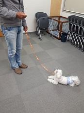 家庭犬訓練士講座でマテ→フセの練習