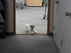 講座の休憩時間に飼い主の帰りを待つ同伴犬