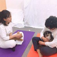 モデル犬でドッグマッサージの実践練習