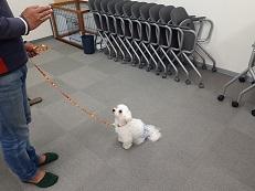 家庭犬訓練士講座でのスワレ・マテの練習