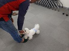 家庭犬訓練士講座でマテからのオイデの練習