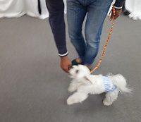 家庭犬訓練士講座での脚側歩行の練習