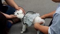 獣医師から学ぶ動物の救急救命実技セミナーでモデル犬で実技体験