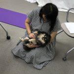 アニマルアロマ通学講座プライベートレッスンのモデル犬