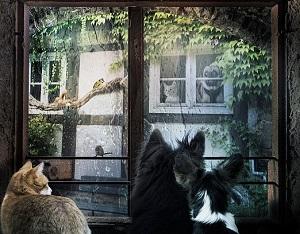 窓越しに雨を見る犬猫