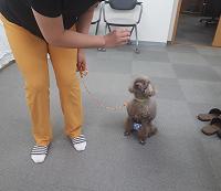 家庭犬訓練士講座の実技練習