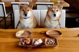 ドッグカフェで仲良く並んで座る柴犬2頭