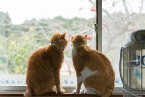 窓の外を眺める猫2匹