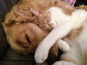 寄り添って寝る犬と猫