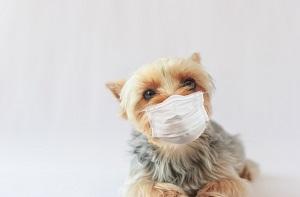 病気 犬 から うつる