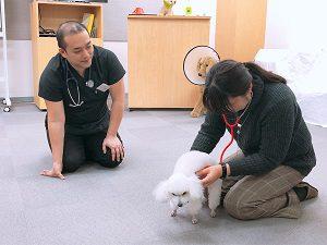 聴診器で犬の心拍確認
