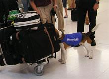 空港で働く検疫探知犬