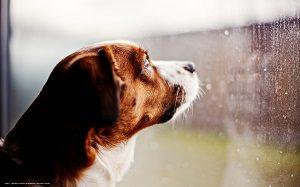 窓から外を眺める犬